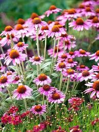 no sun plants full sun garden plants low growing perennials best full sun