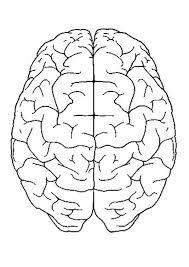 Download Free Anatomy Coloring Sheets Human Brain Printable Brain Brain Coloring Page