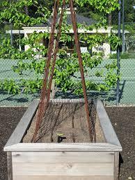 2016 vegetable garden