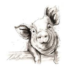 the 25 best pig drawing ideas on pinterest pig art pig