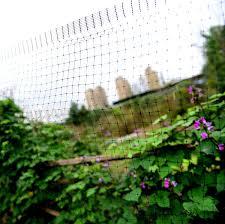 garden bird netting 7 x 75 foot plastic wire mesh for outdoor