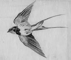 Barn Swallow Tattoo Designs Clare De Pulford Claredepulford On Pinterest