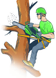 budget tree trimming services in orlando with reviews ratings