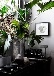 une plante dans une chambre deco chambre interieur plantes vertes