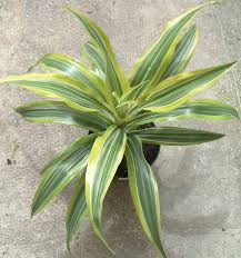 Best Plant For Indoor Low Light The 7 Best Houseplants For Low Light Conditions Plant Pictures