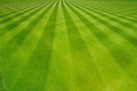 tappeti piacenza realizzazione tappeti erbosi cosa facciamo podere san fiorano
