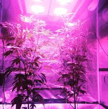 california led grow lights news blog led grow lights california lightworks