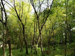 Urban Garden Woodland Hills - 10 parks secret gardens and green spaces in atlanta