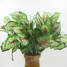 plastic plants picture more detailed picture about 2017 sale