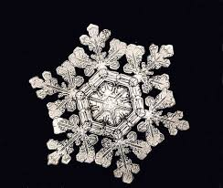 snowflake bentley the man who uncovered the secret lives of snowflakes the