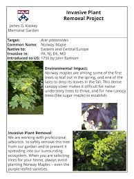 native pa plants invasive plants james g kaskey memorial park