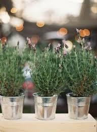 Potted Plants Wedding Centerpieces by Austin Wedding From The Nouveau Romantics Caroline Joy
