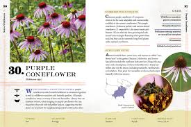 plants for native bees 100 plants to feed the bees provide a healthy habitat to help