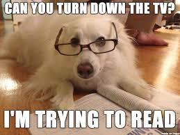 Dog With Glasses Meme - reading dog meme on imgur