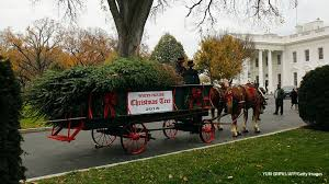 melania to accept white house tree from wisconsin