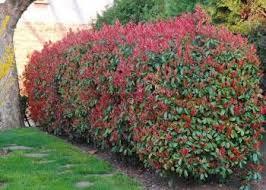 Flowering Shrubs For Partial Sun - 105 best trees and shrubs images on pinterest landscaping