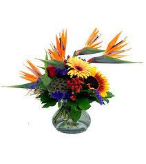 Flowers In Detroit - tropical sunrise premium in detroit and st clair shores mi