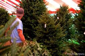 christmas tree lot in boca raton florida hart t tree farms