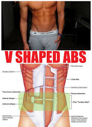 v shaped the 3 golden rules to getting v shaped abs