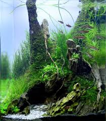 Aquascape Canada 181 Best Aquascape Images On Pinterest Aquarium Ideas