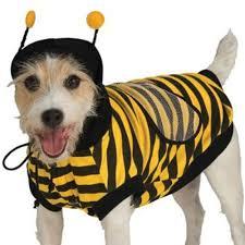 Halloween Costumes Bee Amazon Rubie U0027s Bumble Bee Pet Costume Large Bumblebee