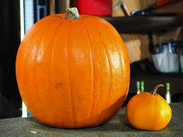 Small Pumpkins Decorating Ideas Halloween Pumpkin Carving A Large Pumpkin Eating A Small Pumpkin