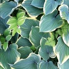 1332 best shade u0026 small gardens images on pinterest shade plants