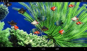 wallpaper hp yang bergerak download aquarium live wallpaper android doubledragon