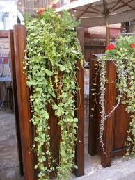gorgeous planters on wooden fence for chic house decor get