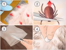 how to stop biting your nails 5 ways to murder the nail biting habit how to prevent tick bites 14 steps with pictures wikihow