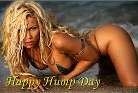 Hump Day Meme Dirty - happy hump day sexy happy hump day graphic codes for myspa flickr