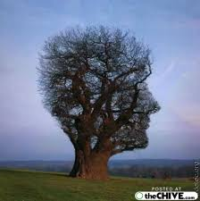 cool trees surprisingly cool tree pics part ii 34 photos beautiful mind and