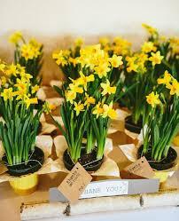 best 25 plant wedding favors live plant wedding favors pleasing best 25 plant wedding favors