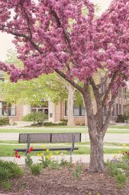 Central Michigan University Campus Map by 44 Best Central Michigan University Images On Pinterest Central