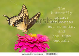butterfly counts not months moments has stock photo 336166034