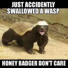 Honey Badger Memes - 10 of the most viewed funny videos on youtube