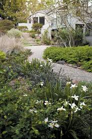 calif native plants 82 best new front yard images on pinterest front yards native