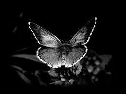 black butterfly background