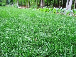 may lawn checklist