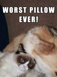 Sleepy Cat Meme - grumpy cat sleep meme 28 images nap quotes like success 32