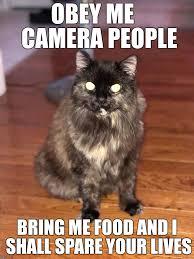 Evil Cat Meme - evil cat imgflip