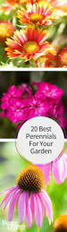 best 25 flowers for garden ideas on pinterest growing flowers