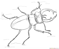 how to draw a stag beetle step by step drawing tutorials