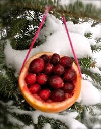 Edible Christmas Tree Decorations For Birds by 21 Best Birds Images On Pinterest For The Birds Christmas Ideas