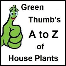 a to z of house plants c section earthdragon u0027s endangered species