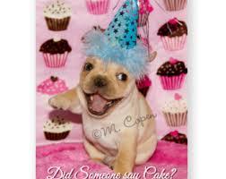 french bulldog birthday cards set of 2 cards