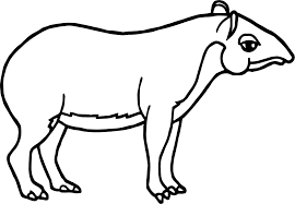 rainforest tapir coloring page wecoloringpage