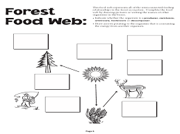 activity 6 food web worksheet the best and most comprehensive
