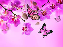 monarch butterfly butterflies orchid pink color flowers