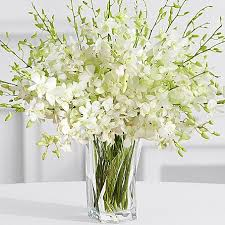 White Dendrobium Orchids Send Orchids Flowers To Dubai Send Orchids Flowers To Sharjah